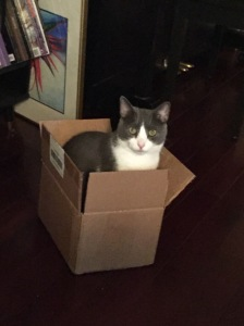 did you see the new study about how having boxes actually reduces cats' stress? I'm doing my part. I wish my boss would give her employees metaphorical boxes - which might, for instance, be clear communication and a moment's reflection before making sweeping statements